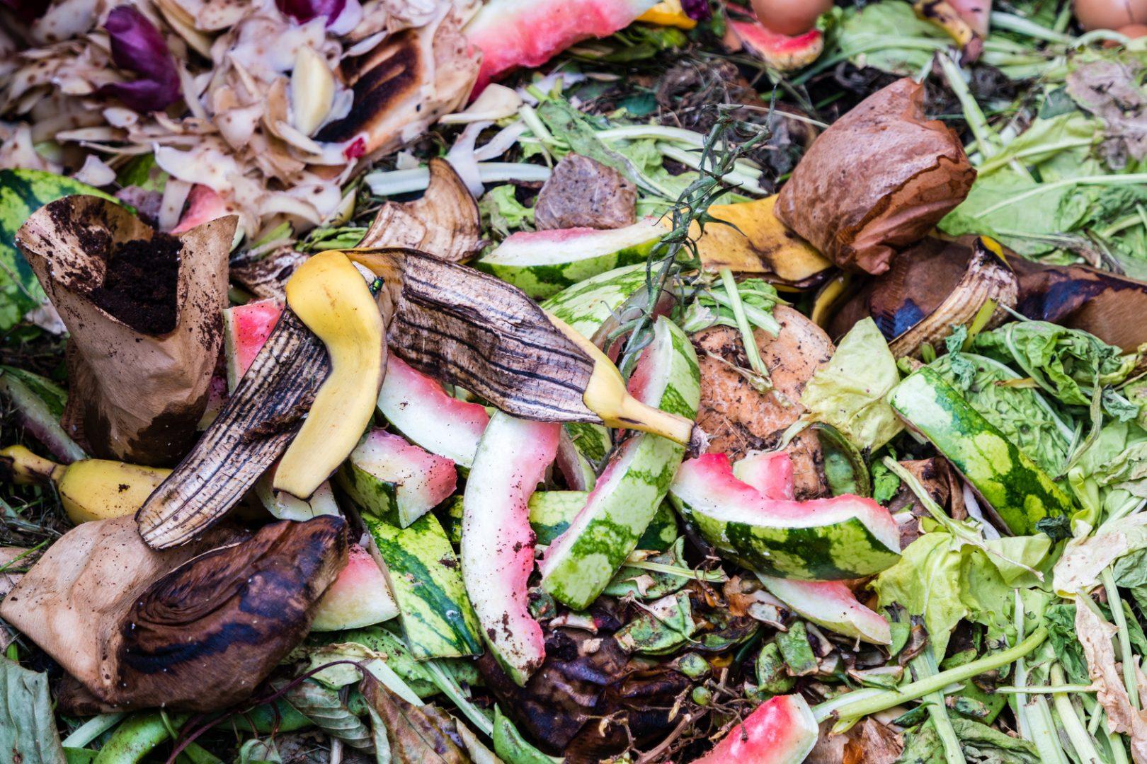 biodéchets déchets organiques