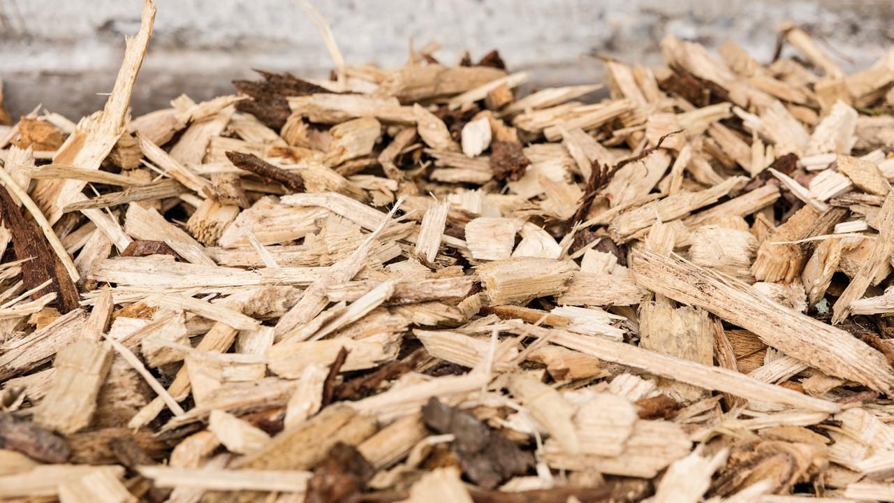 bois-énergie biomasse