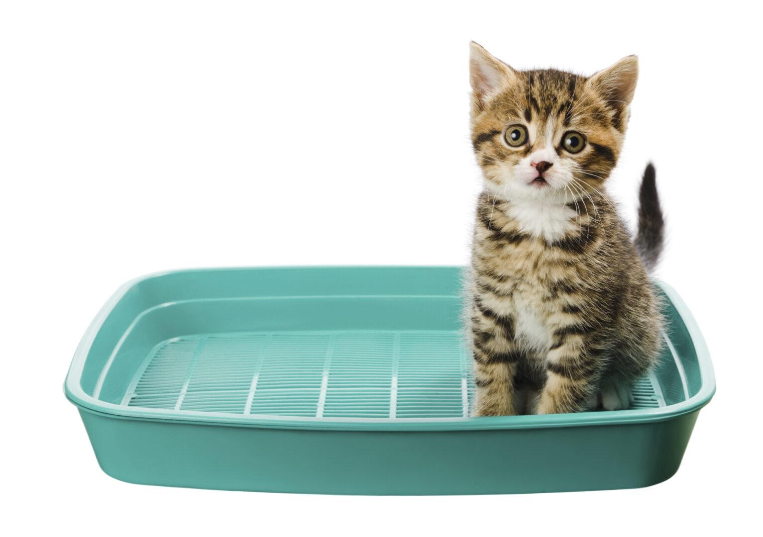 La propreté du chat passe souvent par l'utilisation d'une litière